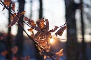 Wintersonne_Baum