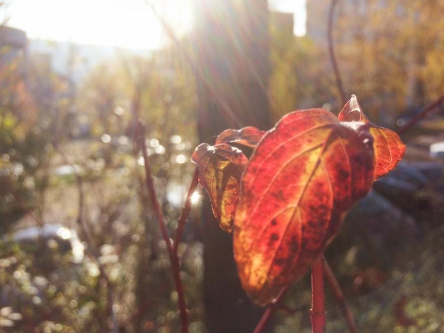 Bokeh Die beste iOS Foto-App für Fotografen - Cameraplus
