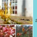 Bokeh mit dem Smartphone für schönere Blogfotos